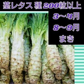 茎レタス 種子200粒以上 莴笋(野菜)
