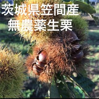 茨城県笠間産☆無農薬生栗1kg(フルーツ)
