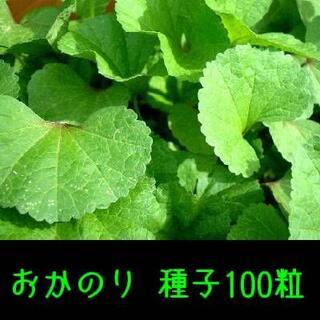 おかのり 種子100粒 固定種 栽培用(野菜)