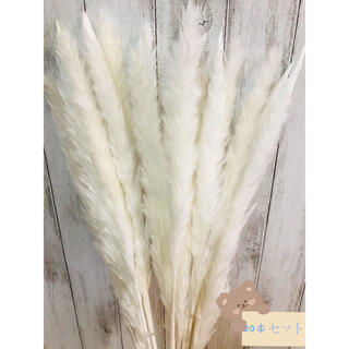 ドライフラワーインテリア パンパスグラス20本テールリードスワッグ花材(ドライフラワー)