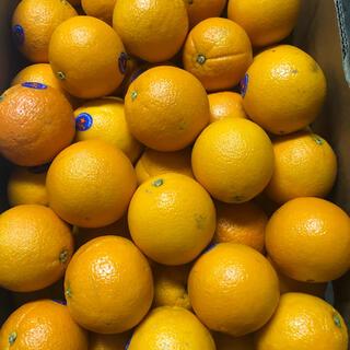 オーストラリア産ネーブルオレンジ 箱込み約10kg(フルーツ)