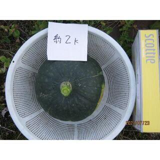 かぼちゃ 4個(野菜)