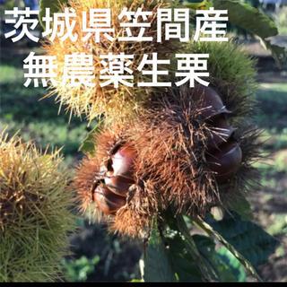 順次発送☆茨城県無農薬生栗1kg(フルーツ)