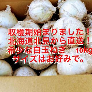 収穫期始まりました。北海道直送 希少な白玉ねぎ10kg(野菜)