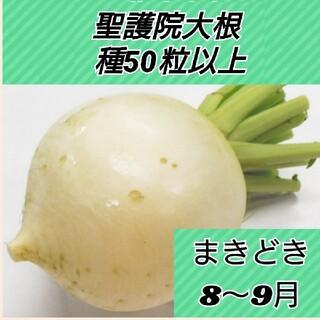 聖護院大根 種50粒以上(野菜)