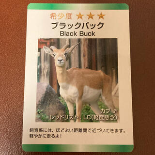 東武動物公園  動物カード ブラックバック カブ♂(印刷物)