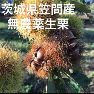 kamira5様専用☆2L〜3Lミックス2kg(フルーツ)