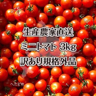 特別栽培農産物 ミニトマト 3kg 北海道産 規格外品 (野菜)