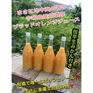 初物 極早生みかん付き! ブラッドオレンジジュース 宇和島産(フルーツ)