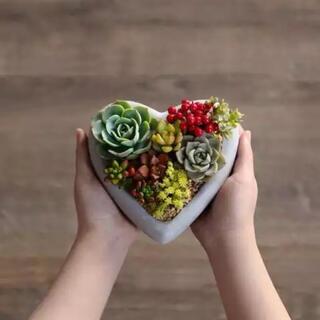 プランター セメント 植木鉢 Sweet Heart(プランター)