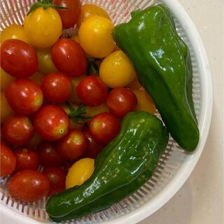 ピーマン 種 無農薬(野菜)