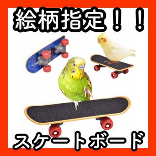 D18【新品】鳥 インコ オウム スケートボード おもちゃ 小動物 スケボー