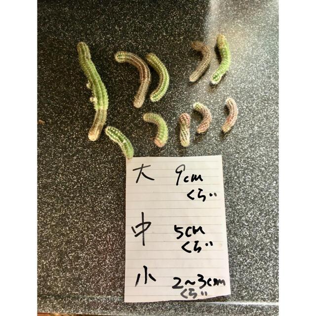 サボテン白檀10本+多肉植物おまけ ハンドメイドのフラワー/ガーデン(その他)の商品写真