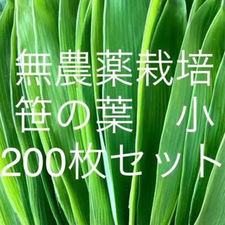 無農薬栽培 山採り 笹の葉 小サイズ 200枚セット(野菜)