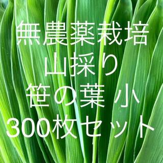 無農薬栽培 山採り 笹の葉 小サイズ 300枚セット(野菜)