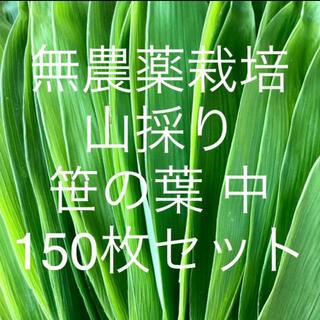 無農薬栽培 山採り 笹の葉 中サイズ 150枚セット(野菜)