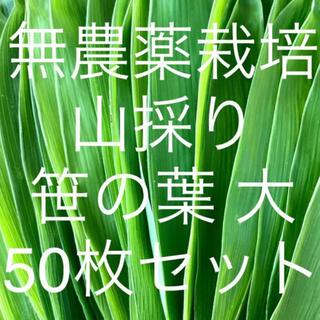 無農薬栽培 山採り 笹の葉 大サイズ 50枚セット(野菜)