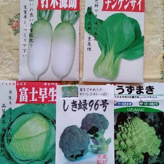 野菜の種 夏 秋まき(野菜)