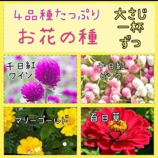 お花の種4品種たっぷりset(その他)