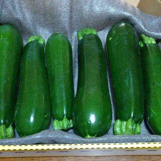 ズッキーニの種【25粒】増量サービス中(野菜)