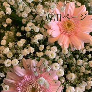 シャルレ(シャルレ)のコユキ様専用ページ(その他)