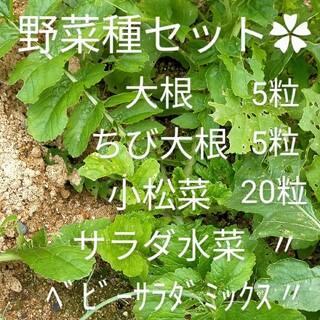 今植えれます✿野菜 種セット✿(野菜)