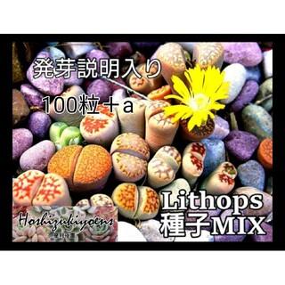 【これから蒔時】リトープス ミックス 種子 100粒+a発芽説明入り (その他)