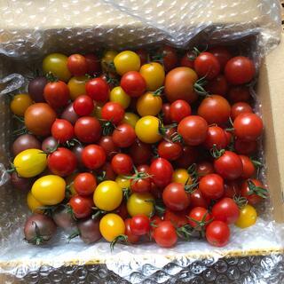 無農薬 トマトセット 箱込み1kg(野菜)
