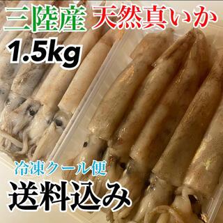 【天然真イカ】産地直送 大容量1.5kg 個包装5〜6袋 スルメイカ ヤリイカ (魚介)