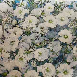 宿根 かすみ草 種 100粒 カスミソウ オマケでオルラヤ&白ニゲラの種 (その他)