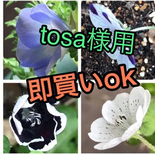 tosa様用 9月から撒き時に ネモフィラ 4種類  計100粒(プランター)