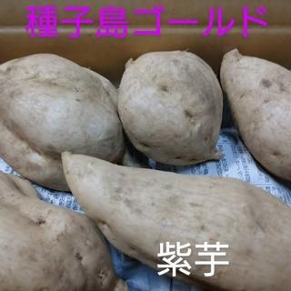 種子島ゴールド 5キロ(野菜)