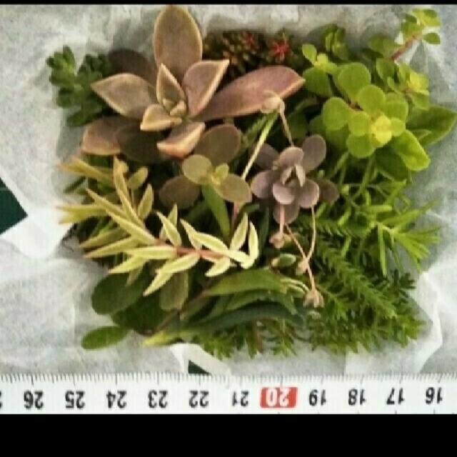 多肉植物 色々、詰め合わせ  ハンドメイドのフラワー/ガーデン(プランター)の商品写真
