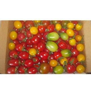 低農薬ミニトマトセット約1.8キロ(野菜)