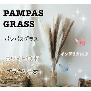 パンパスグラス ⭐︎ドライフラワー インテリア 15本 ホワイト ブラウン(ドライフラワー)