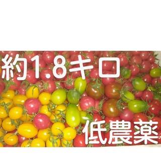 完熟低農薬ミニトマトセット約1.8キロ(野菜)