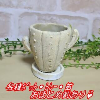 【サボテンのポット(受皿付き):S】 植木鉢 プランター 多肉植物 寄せ植え(プランター)