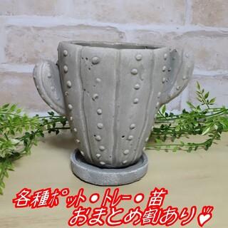 【サボテンのポット(受皿付き):L】 植木鉢 プランター 多肉植物 寄せ植え(プランター)