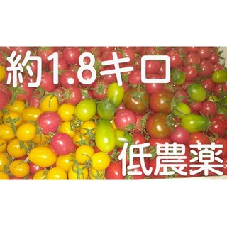 junkobo様専用・完熟低農薬ミニトマトセット約1.8キロ(野菜)
