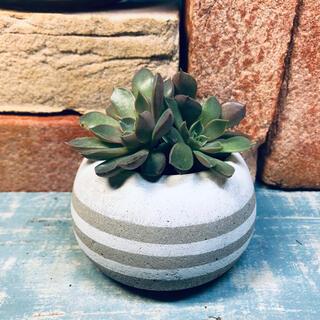 コロンと丸いプランター 植木鉢 キャンドルスタンド ボーダー(プランター)