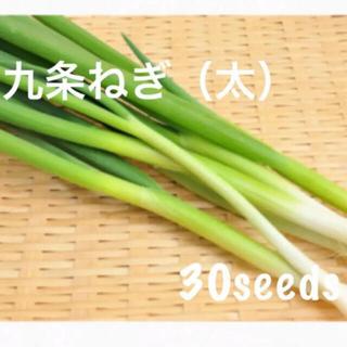 まき時! 京野菜 九条ねぎ 太 種30粒(野菜)