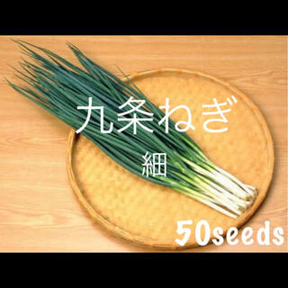 まき時! 京野菜 九条ねぎ 細 ドドーンっと! 種50粒!(野菜)