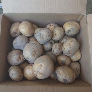 愛媛県産 じゃがいもキタアカ3㎏土つき(野菜)