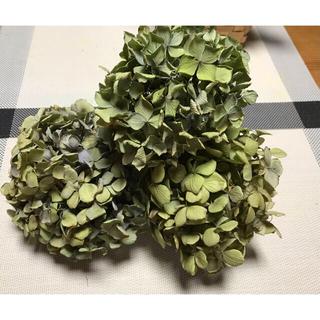 紫陽花ドライフラワー  3本 秋色紫陽花(ドライフラワー)
