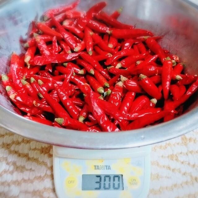 無農薬栽培 唐辛子 80g 食品/飲料/酒の食品(野菜)の商品写真