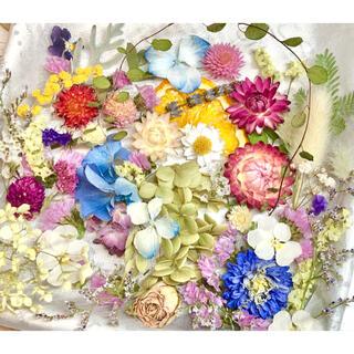 ドライフラワー花材セットNo.256⁑カラフルバラエティー(ドライフラワー)
