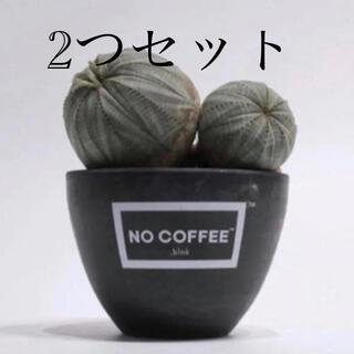 【 2つセット】NO COFFEE × BOTANIZE (プランター)