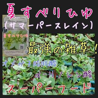 夏すべりひゆ 固定種 野菜の種 ハーブの種 水耕栽培 家庭菜園 種子 種(野菜)