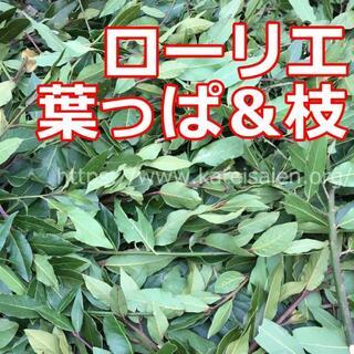 manaさん専用■無農薬 ローリエ 月桂樹 葉っぱ&枝30本(調味料)