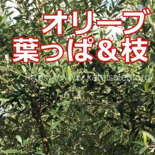 無農薬 オリーブ 葉っぱ&枝 リース オリーブ茶☆オーダメイド対応可♪(各種パーツ)
